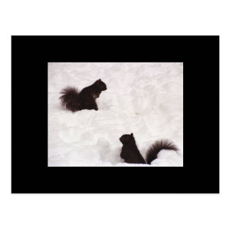 Squirrels in snow postcard