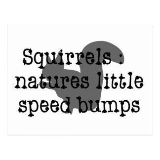 Squirrels : Natures Little Speedbumps Postcard