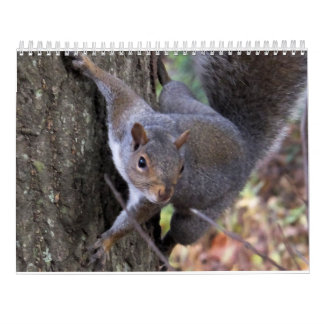 Squirrels of Saltus Fidelis Calendar