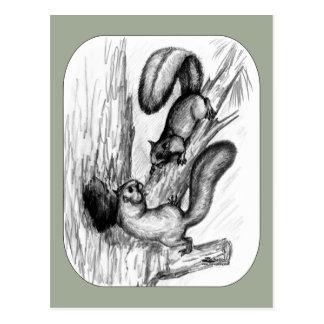 Squirrels Postcard