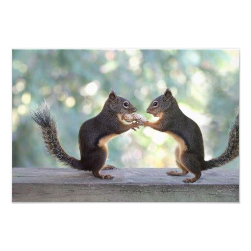 Squirrels Sharing a Peanut Photo