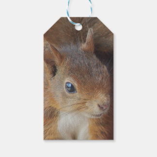 Squirrels Squirrel/photo: Jean Louis Glineur Pack Of Gift Tags