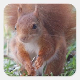 Squirrels Squirrel/photo: Jean Louis Glineur Square Sticker