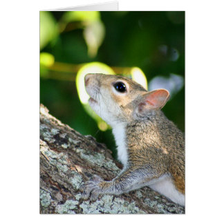 Squirrely! card
