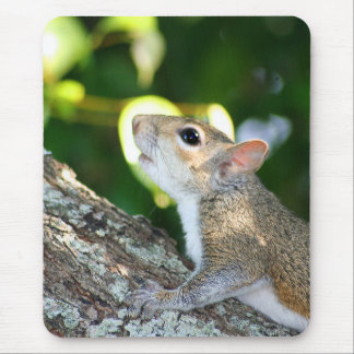 Squirrely! mousepad