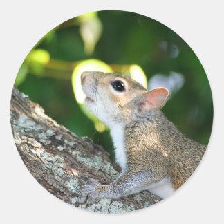 Squirrely! sticker