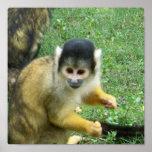 Squirrrel Monkey Poster