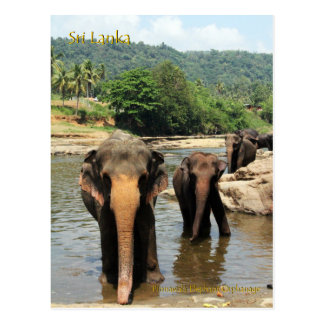Sri Lanka, Pinnawala Elephant Orphanage Postcard