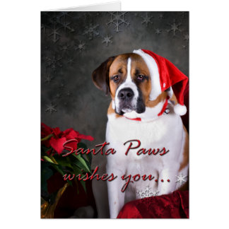 St. Bernard Christmas Card
