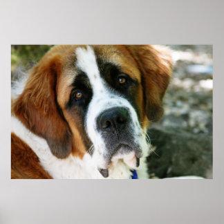 st bernard dog post poster