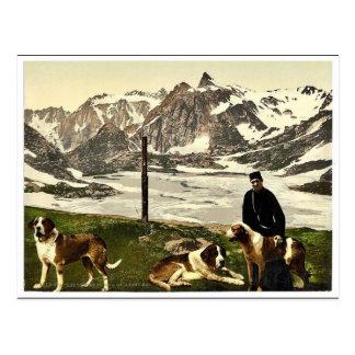 St. Bernard dogs, Valais, Alps of, Switzerland cla Postcard
