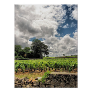 St. Emillion vineyards Poster