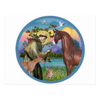 St Francis - Brown Arabian Horse Postcard