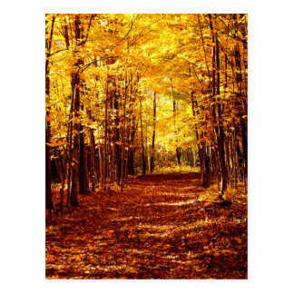 St Joseph Island Fall Colours Postcard