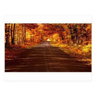 St Joseph Island roadway in full Fall colour Postcard
