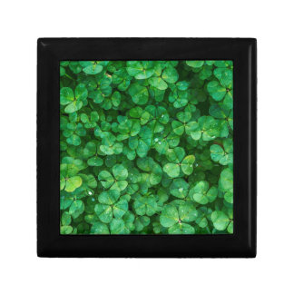 St Patrick lucky clovers Gift Box