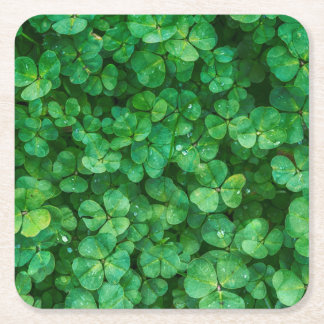 St Patrick lucky clovers Square Paper Coaster