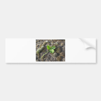 St. Patrick's Day background . Clover on the rock Bumper Sticker