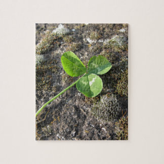 St. Patrick's Day background . Clover on the rock Jigsaw Puzzle