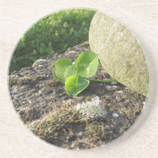 St. Patrick's Day background with clover by stone Beverage Coaster