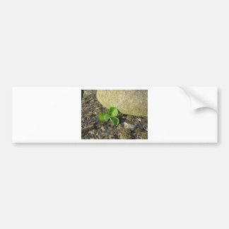 St. Patrick's Day background with clover by stone Bumper Sticker