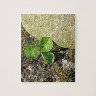 St. Patrick's Day background with clover by stone Puzzles