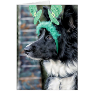 St.Patrick's Day Border Collie Card