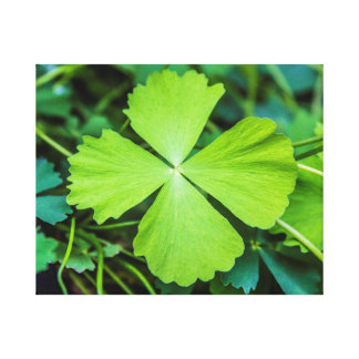 St. Patrick's Day Canvas Print