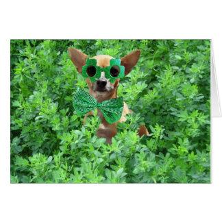St Patricks Day Chihuahua Card