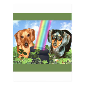 St Patricts Day Doxies Postcard