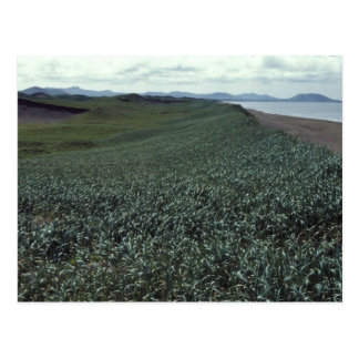 St. Paul Island, Sand dune habitat Pribilof Island Postcard