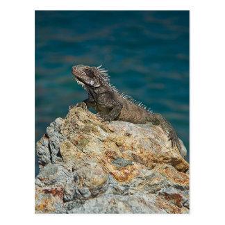St. Thomas , Iguana Postcard