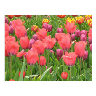 Stacey's Floral Design's Postcard