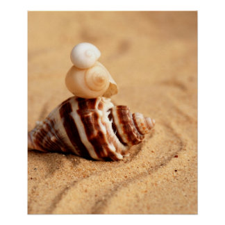 Stack of Pretty Conch Shells Poster