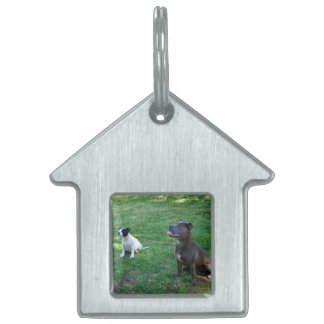 Staffies Waiting For Tasy Treats,_Kennel_Dog_Tag Pet Name Tags