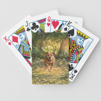 Staffordshire bull terrier bicycle playing cards