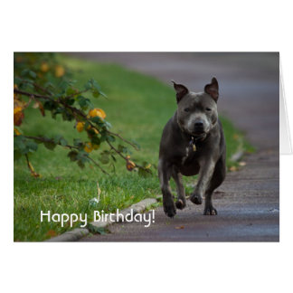 Staffordshire Bull Terrier Card