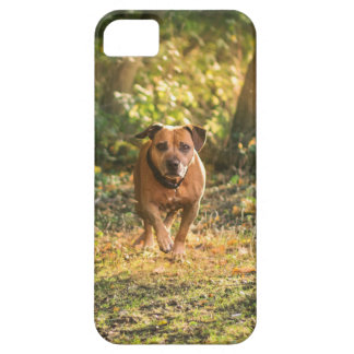 Staffordshire bull terrier case for the iPhone 5