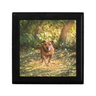 Staffordshire bull terrier gift box