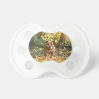 Staffordshire bull terrier pacifier