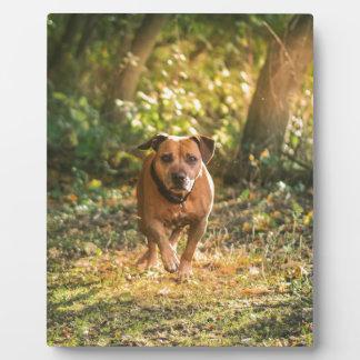 Staffordshire bull terrier plaque