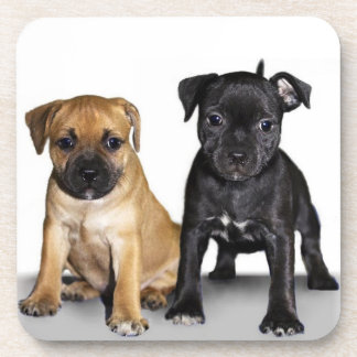 Staffordshire bull terrier puppies coasters