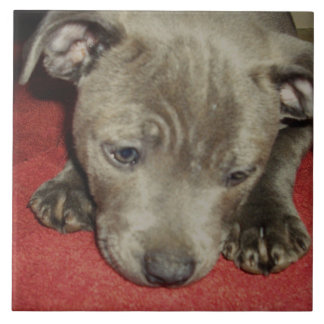 Staffordshire_Bull_Terrier_Puppy,_Ceramic_Tile Tiles