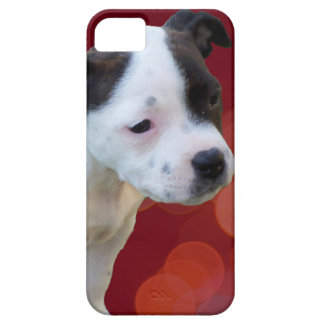 Staffordshire Bull Terrier Puppy, iPhone 5 Cover