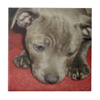 Staffordshire_Bull_Terrier_Puppy,_Small_Tile Ceramic Tiles