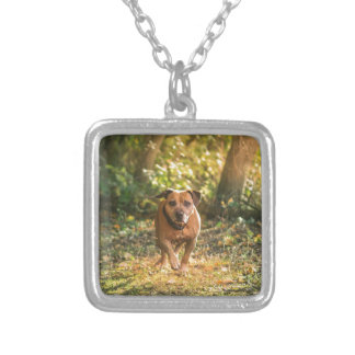Staffordshire bull terrier silver plated necklace