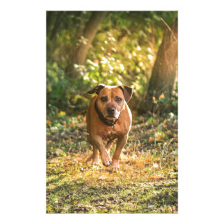 Staffordshire bull terrier stationery