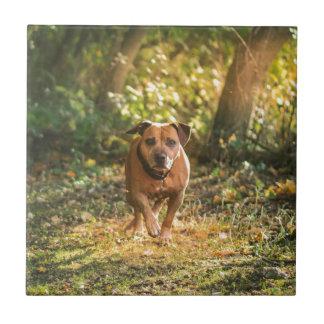 Staffordshire bull terrier tile