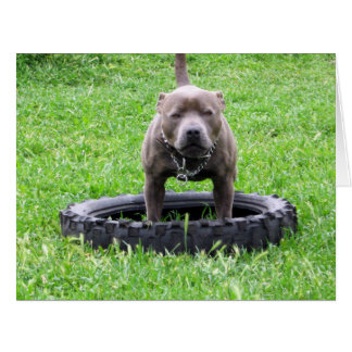 Staffy,_In_Chew_Tyre,-Big_Greeting_Birthday_Card Card