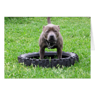 Staffy,_In_Chew_Tyre,-Greeting_Card Card